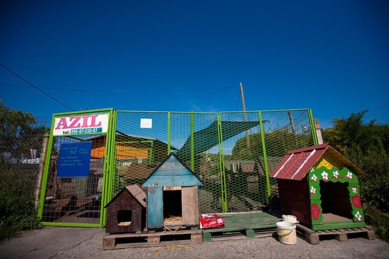 Animal Shelter in Osijek
